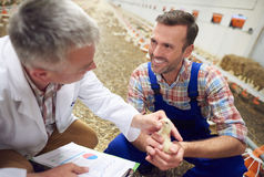 Working partners at the farm stock images