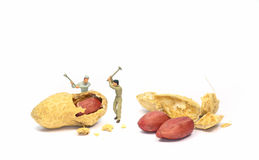Working for peanuts Stock Images