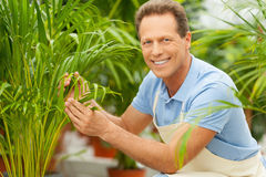 Working with plants is great pleasure. Stock Image