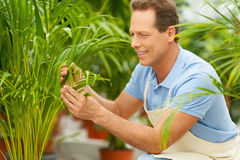 Working with plants. Royalty Free Stock Image