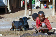 Working poor african children and cow. Madagascar Royalty Free Stock Images