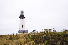 Working powerful lighthouse on high hill covered grass wild flow Royalty Free Stock Photos