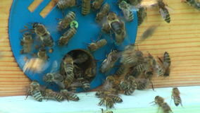 Working process of bees in beehive stock video