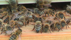 Working process of bees in a beehive stock footage