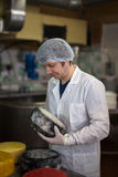 Working on  production of cheese at  dairy , with cheeses Stock Images