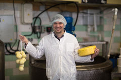 Working on  production of cheese at  dairy , with cheeses Stock Photo