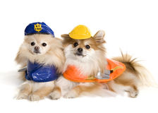 Working Pups Royalty Free Stock Photography