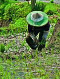 Working at rice field Royalty Free Stock Image