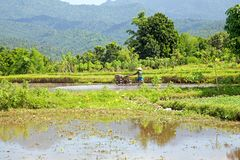 Working in the rice fields in Bali Indonesia Stock Photography
