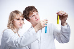 Working scientists. A shot of a male and female caucasian scientists royalty free stock images