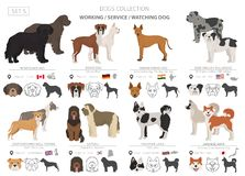Free Working, Service And Watching Dogs Collection Isolated On White. Flat Style. Different Color And Country Of Origin Royalty Free Stock Photography - 142839807
