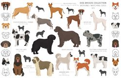Free Working, Service And Watching Dogs Collection Isolated On White. Flat Style. Different Color And Country Of Origin Royalty Free Stock Photo - 164216755