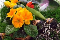 Working in the spring garden Stock Photos
