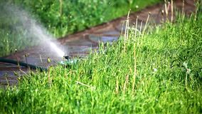 Sprinkler in a garden stock footage