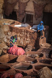 Working in a tannery, Fez Royalty Free Stock Photos