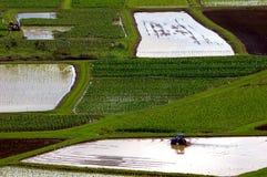 Working taro. Tractor in flooded taro field in hanalei valley kauai Royalty Free Stock Photos