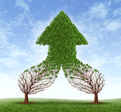 Working Together For Success. Working together business symbol and financial merger concept as two trees connecting  and merging as one forming a healthy growing Royalty Free Stock Images