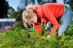 Working in vegetable garden Royalty Free Stock Images