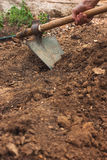 Working in vegetable garden with hoe. Digging soil with hoe in vegetable garden Royalty Free Stock Photo