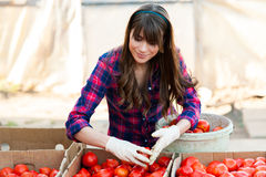 Working with vegetables Royalty Free Stock Photography