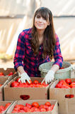 Working with vegetables Royalty Free Stock Image