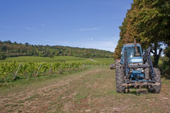 Working Vineyard. A working vineyard on a sunny Autumn day Stock Photo