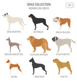 Working watching dog breeds collection isolated on white. Flat Royalty Free Stock Photos