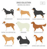 Working watching dog breeds collection isolated on white. Flat Stock Photography