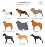 Working watching dog breeds collection isolated on white. Flat Stock Photos