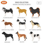 Working, watching dog breeds,  set icon isolated on white . Flat Stock Images