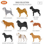 Working, watching dog breeds,  set icon isolated on white . Flat Stock Photos