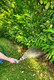 Working watering garden from hose Royalty Free Stock Photography