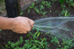Working watering Stock Images