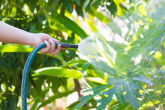 Working watering garden from hose. Working watering garden royalty free stock images