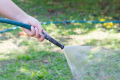 Working watering garden from hose Stock Image