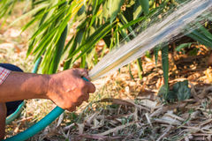Working watering garden Stock Photography