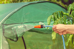 Working watering garden from hose. Watering garden equipment - hand holds the sprinkler hose for irrigation plants. Gardener working royalty free stock photos