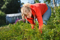 Working in wegetable garden Stock Photos