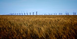 Working windmill. In the middle of the field Stock Photo