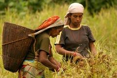 Working women stock image