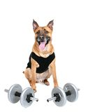 Workout dog Royalty Free Stock Images