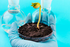 Workplace on laboratory for biotechnological testing of sprouts. Stock Photos