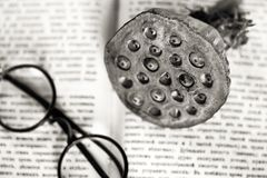 Workplace of the scientist. Opened ancient book, round glasses, lotus fruit. Royalty Free Stock Image