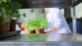 Works in a greenhouse stock footage