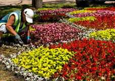 Works on laying of flowerbeds. Royalty Free Stock Photo