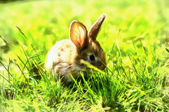 The works in the style of watercolor painting. Fluffy rabbit on Stock Photos