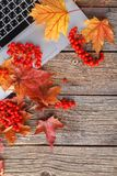 Workspace with yellow and red maple leaves. Desktop with laptop, fallen leaves on grey wooden background stock photos