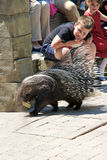 World Biodiversity Day. FUENGIROLA, SPAIN - MAY 22: kids look a porcupine in Bioparc where celebrates The International Day for Biological Diversity on May 22 Royalty Free Stock Photo