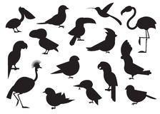 World Birds Outline Icons Stock Images