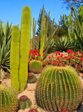 The World of Cactus Royalty Free Stock Image